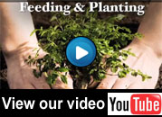 YouTube video or Arbor-Us tree pruning, care and hazardous branch removal